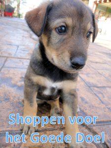 Online winkelen voor het goede doel. help een zwerfdier